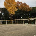 Yoyogi Park & Takeshita Street, Tokyo