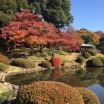 Shinjuku Gyoen National Garden + Shibuya Crossing
