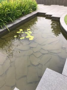 vista residence koi fish pond